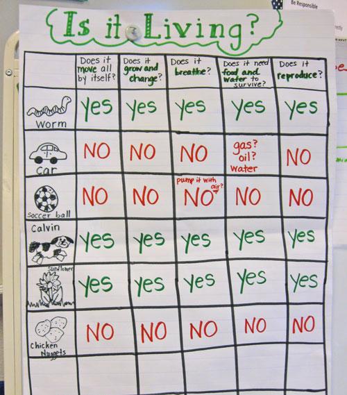 A Science Mini Unit Living And Non Living Kindergarten Kindergarten