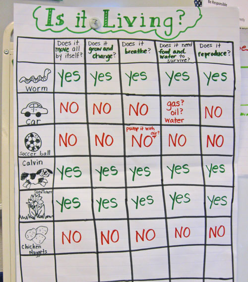 A Science MiniUnit Living and NonLiving Kindergarten Kindergarten – Living Vs Nonliving Worksheet