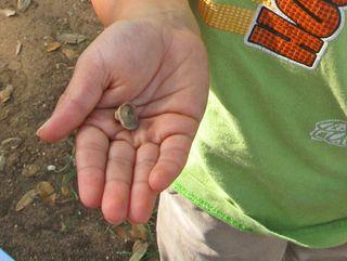 Kindergarten-fossil-lesson