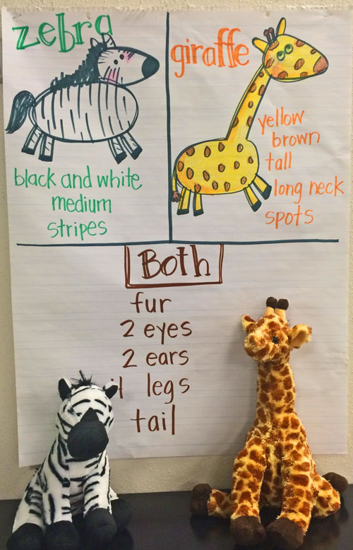 Animal-anchor-chart