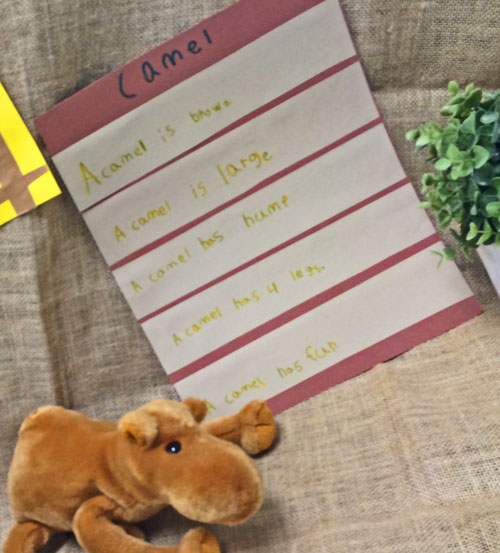 There's a Zoo in our Room! - Kindergarten Kindergarten