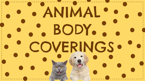 Animal-Coverings-Slideshow