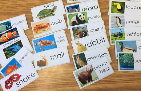 Kindergarten-Animal-Sort